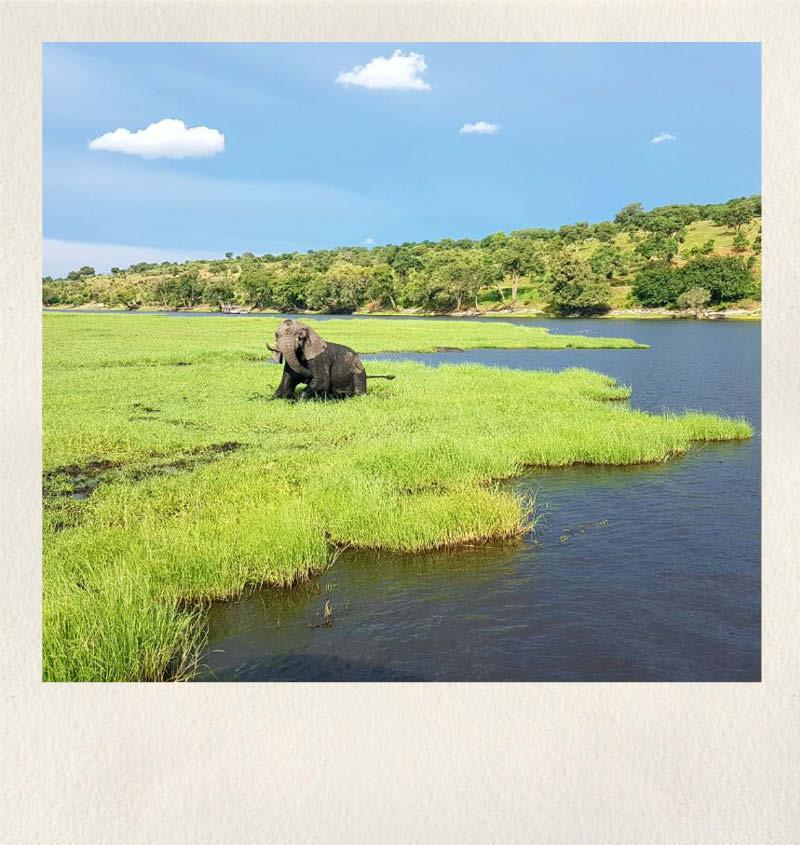 Botswana Safari Adsia Ecoventures 01