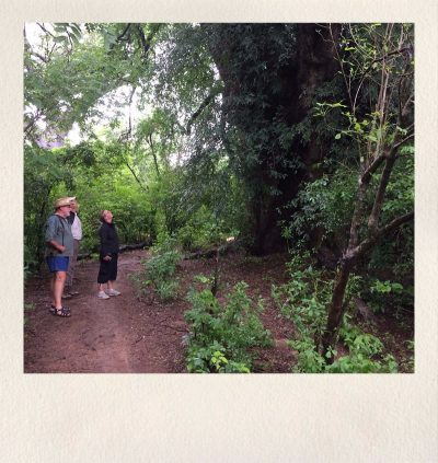 zimbabwe safari - asdia ecoventures 5